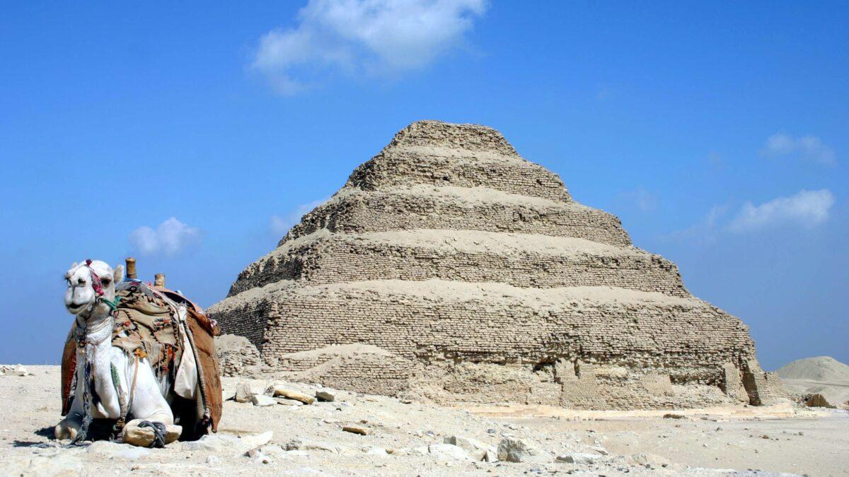 La genética ayuda a averiguar de dónde salieron los cuatro millones de ibis momificados de Saqqara