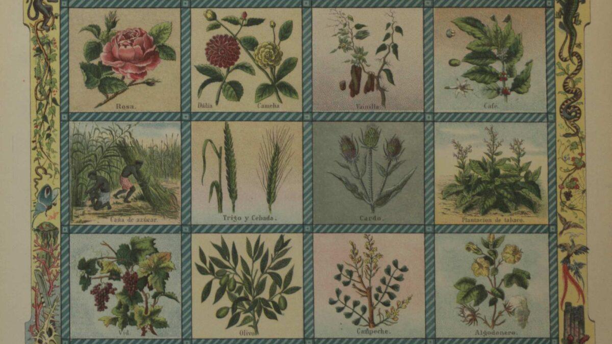 Los botánicos, una especie en peligro de extinción